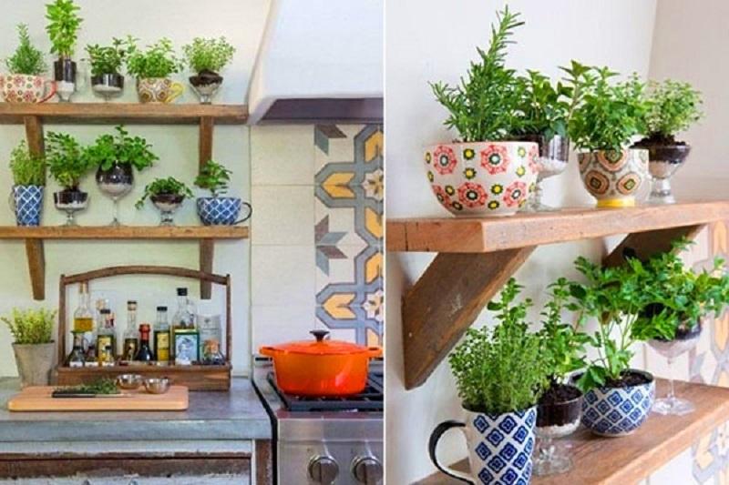 Cây xanh trong bếp