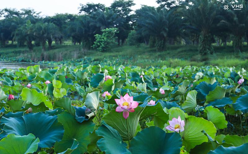 Ecopark-dep-diu-dang-ben-nhung-sac-hoa-mua-ha-7