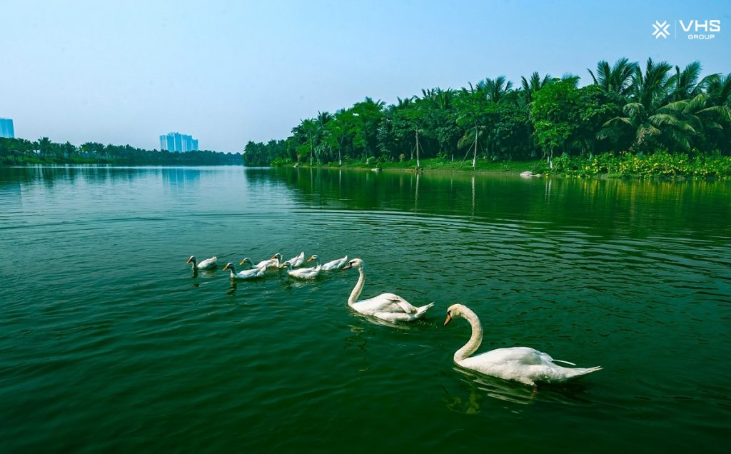 Kham-pha-cong-vien-Ho-Thien-Nga-Ecopark-6